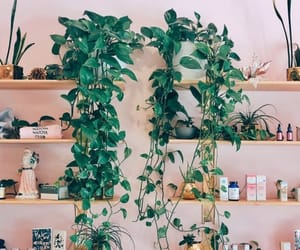 botanical, deco, and interior image