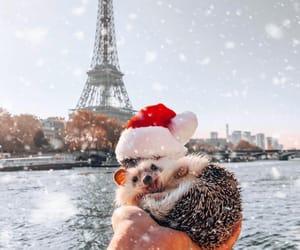 animal, winter, and christmas image