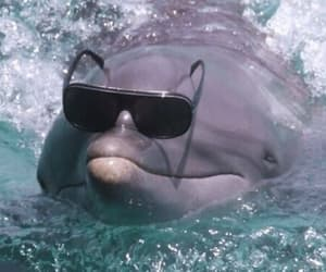 dolphin, aesthetic, and animal image