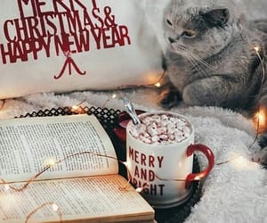 cats, hot chocolate, and christmas image
