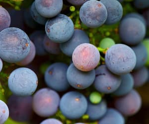 grapes, wine, and yummy image