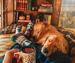 dog, autumn, and books image