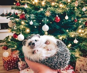christmas, animal, and christmas tree image
