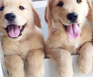 dog, puppies, and dogs image