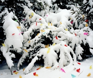 feathers, rainbow, and snow image