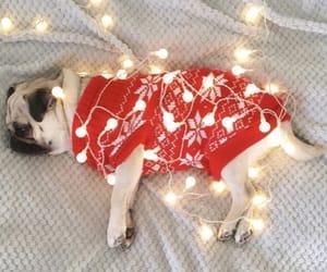 christmas, light, and dog image