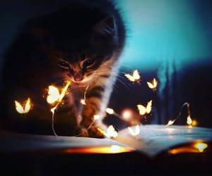 books, كُتُب, and قطة image