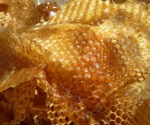 theme, aesthetic, and honey image