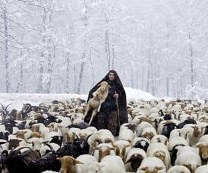 animals and iran image