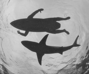 shark, surf, and sea image