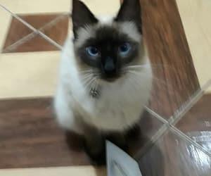 bb, cat, and mel image