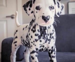 aesthetic, animal, and dog image