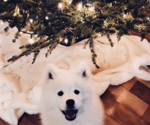 christmas, fashion, and Samoyed image
