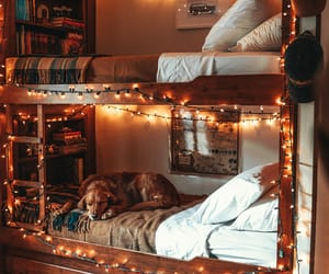 dog, home, and lights image