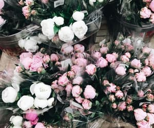 flowers, peonies, and plants image