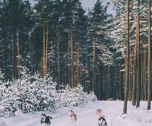 beautiful, dogs, and winter image