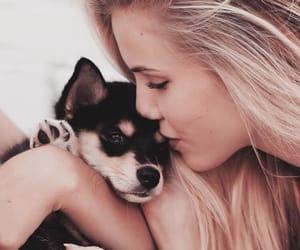 dog, cute, and blonde image