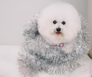 bokeh, christmas, and holiday image