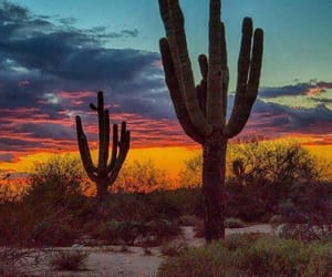 cactus, colors, and sunset image