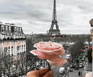 paris, rose, and france image