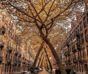fall, street, and sun image