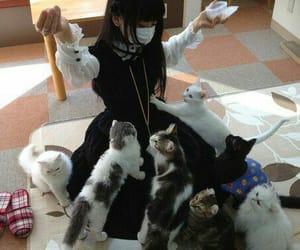 cat, neko, and asian image