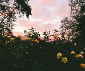 flowers, sky, and nature image
