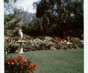 floral, flowers, and garden image