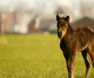 adorable, baby, and filly image