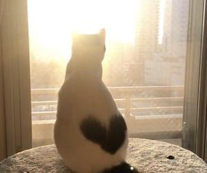 animals, heart, and sun image