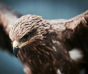 animal and eagle image