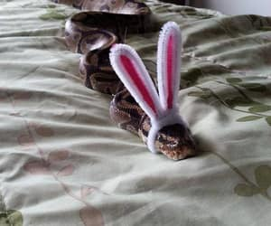 bunny ears, snake, and cute image
