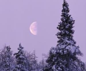 purple, lilac, and moon image