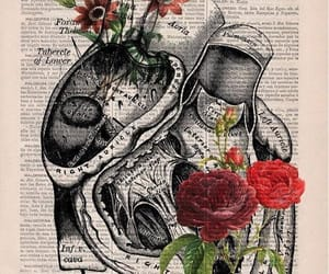 art, book, and heart image