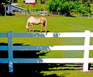 vinyl fencing, fence products, and rail ranch image