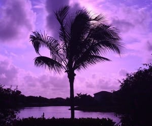 purple, aesthetic, and palm tree image