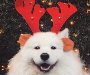animal and christmas image