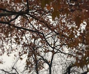 forest, sonbahar, and güz image