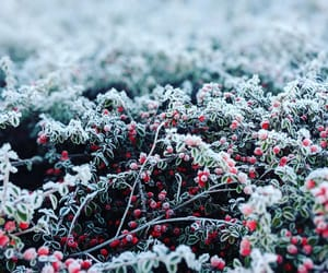 berry, cold, and frost image