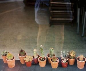 vintage, cactus, and indie image