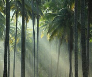 nature, green, and palm trees image
