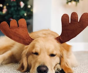 animal, holidays, and style image