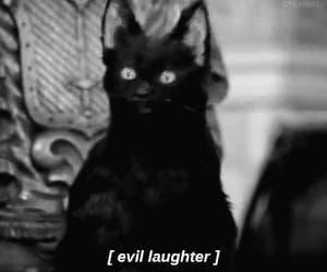 black&white, cat, and sabrina image