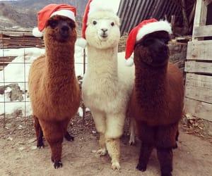 alpacas, lamas, and tiere image