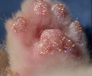 cat, glitter, and paws image