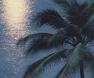 palm tree, trailer park, and lizzy grant image