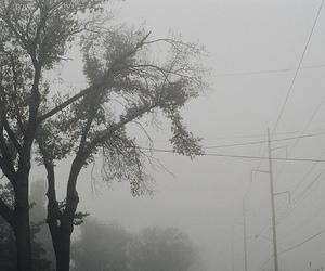 fog and tree image