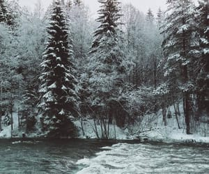 forest, frozen, and lake image