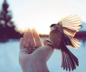 bird and winter image