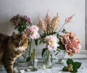 floral and flowers image